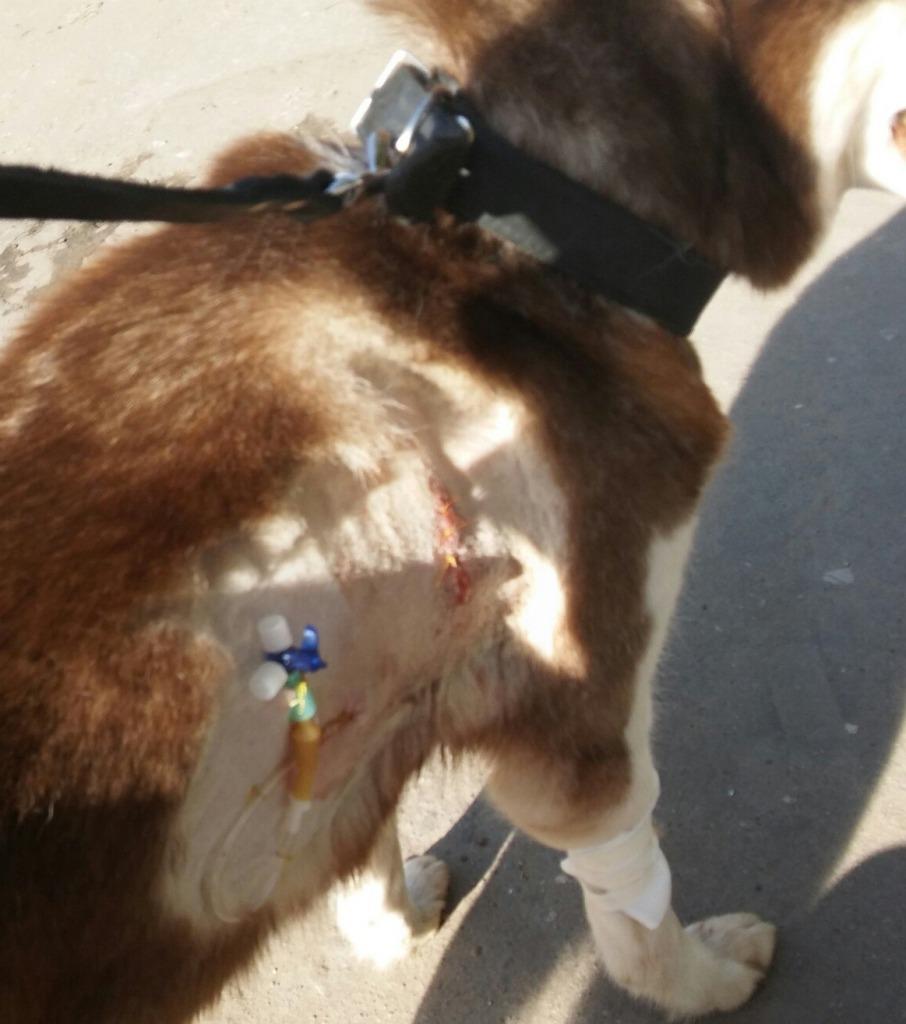 Забравшийся вквартиру нижегородец избил ивыкинул собаку изокна