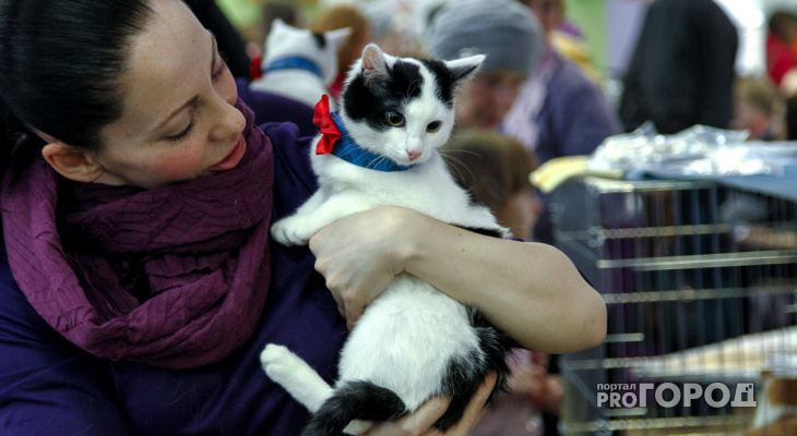 Нижегородская компания открыла уникальную вакансию для кота