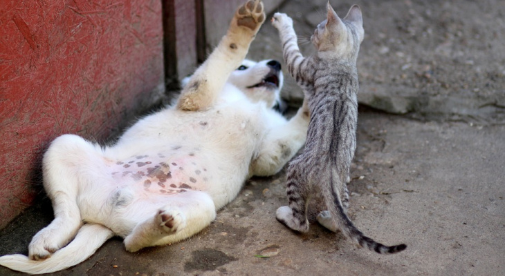 Нижегородцев будут штрафовать за призыв к жестокому обращению с животными
