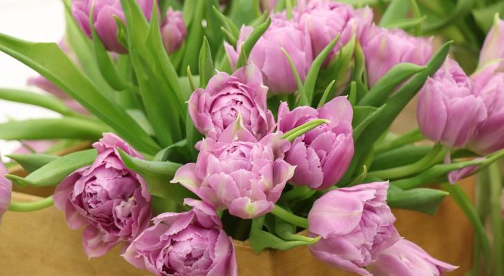 Как нижегородцам выбрать цветы к 8 марта