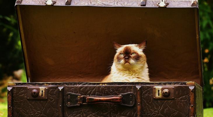 Эксперты Роскачества рассказали, как выбрать идеальный чемодан в поездку