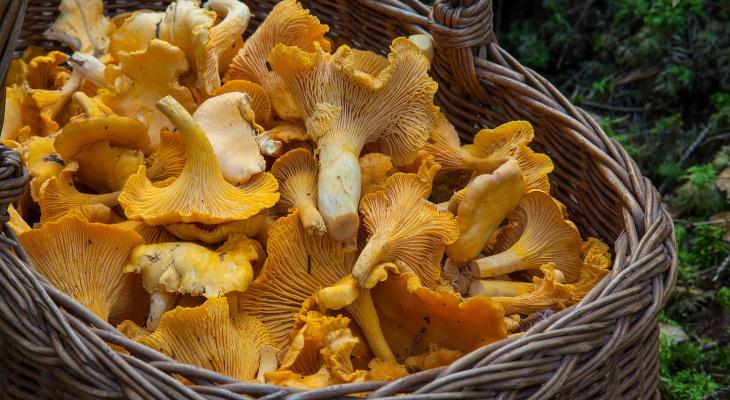 Как правильно и вкусно приготовить грибы в дома: советы и рецепты