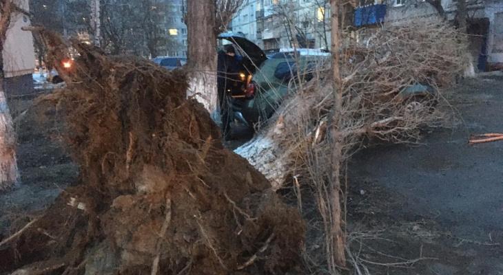 Упавшее из-за сильного ветра дерево придавило три автомобиля на улице Строкина