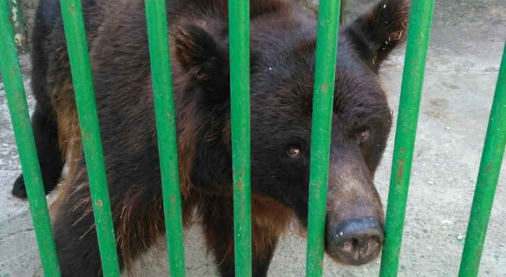 Закрытый зоопарк «Мишутка» оказался приютом для диких животных