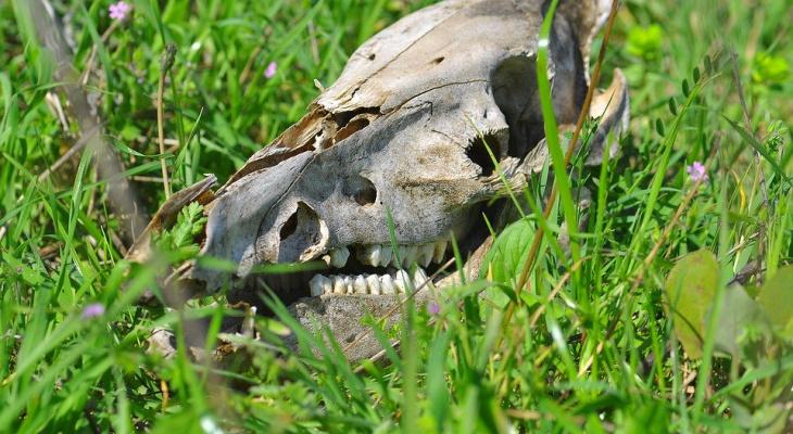 Скотомогильник с сибирской язвой обнаружен в Нижегородской области