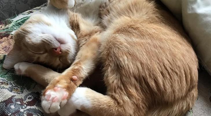 «Одним рыжим дублем»: нижегородский кот снялся для Первого канала