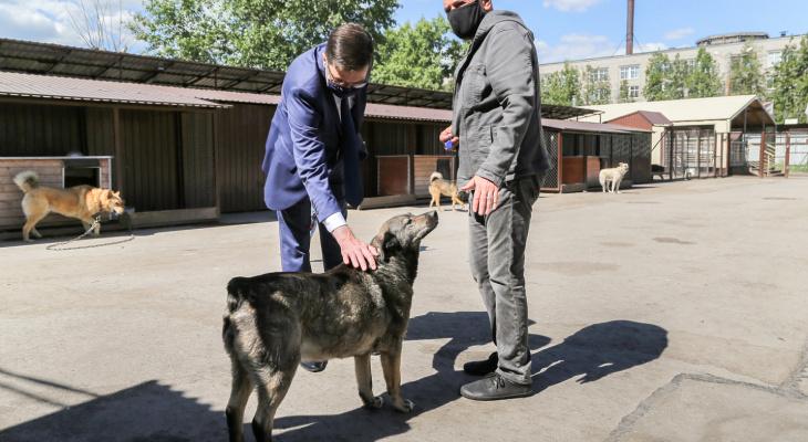 ВНижнем Новгороде открылся первый госпиталь наколесах для животных