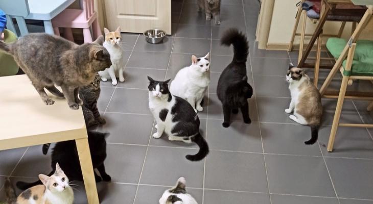 Нижегородское кототафе «Мурзик» спасли отзакрытия