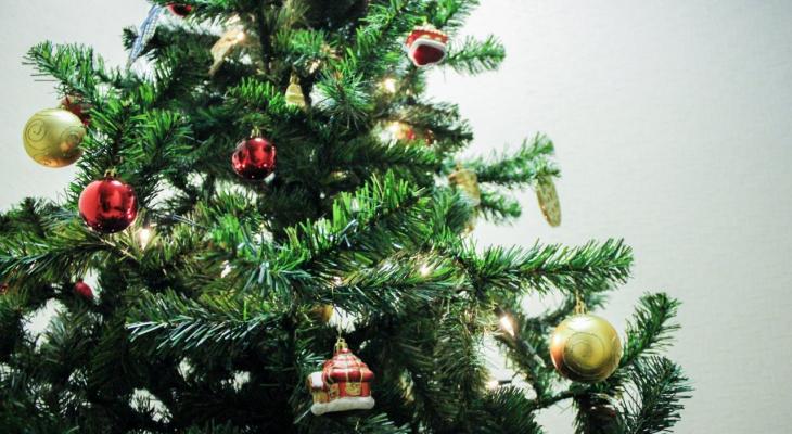 Нижегородцам рассказали, как правильно выбрать новогоднюю елку