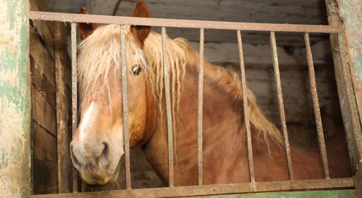 Правительство поможет восстановить и сохранить Починковский конный завод