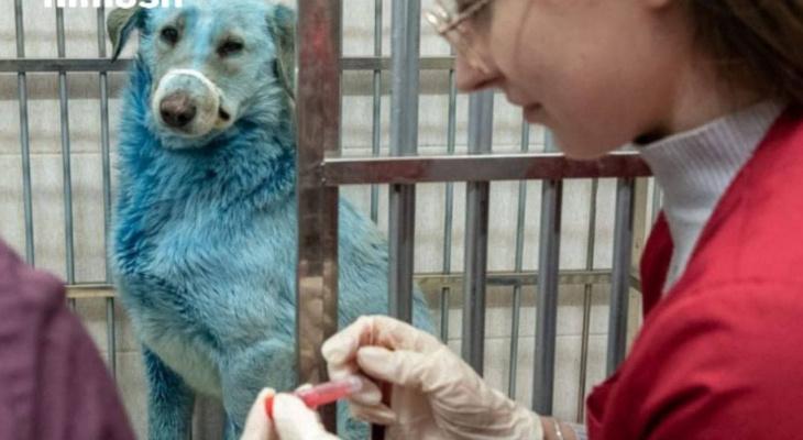 Синих собак из Дзержинского завода привезли в ветклинику (ФОТО)
