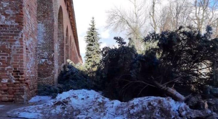 В нижегородском кремле вырубают многолетние ели