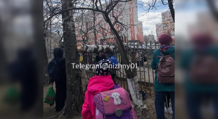 Упавшее у школы дерево едва не раздавило первоклассника в Нижнем Новгороде